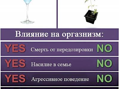 Сравнение действия конопли и алкоголя на организм человека