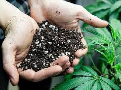 Какой состав почвы идеален для выращивания каннабиса аутдор?