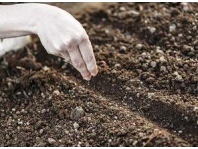 Как лучше посадить семена конопляные носки с марихуаной купить в спб